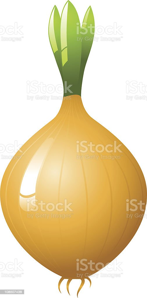 Onion royalty-free stock vector art