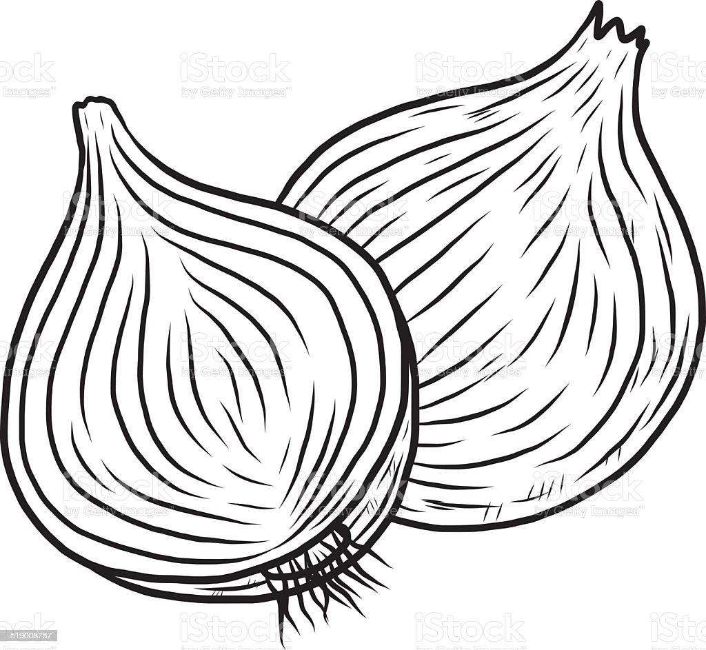 Onion Stock Vector Art & More Images of Agriculture ...