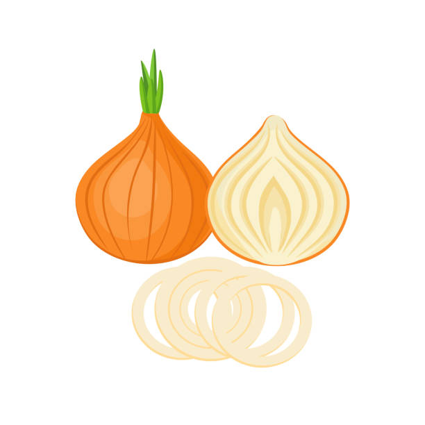 onion onion whole and slices isolated on white background. Vector illustration. ingredients for cooking. onion stock illustrations