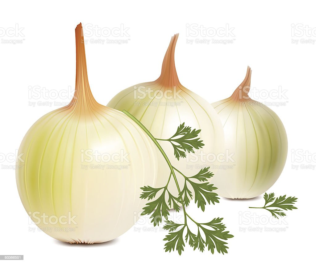 Onions and parsley. royalty-free stock vector art