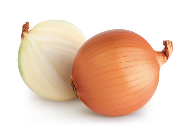 Onions isolated. Realistic vector 3d illustration Onions isolated. Realistic vector 3d illustration onion stock illustrations