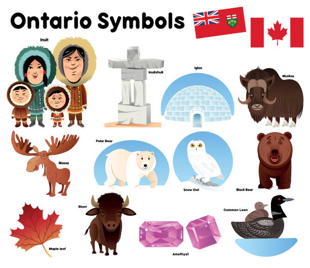Ontario Symbols Vector Ontario Symbols loon bird stock illustrations