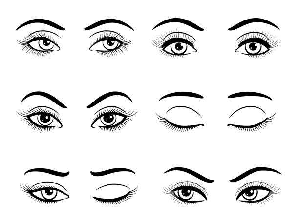 Open and closed female eyes set Hand drawn open and closed female eyes set. Vector illustration female likeness stock illustrations