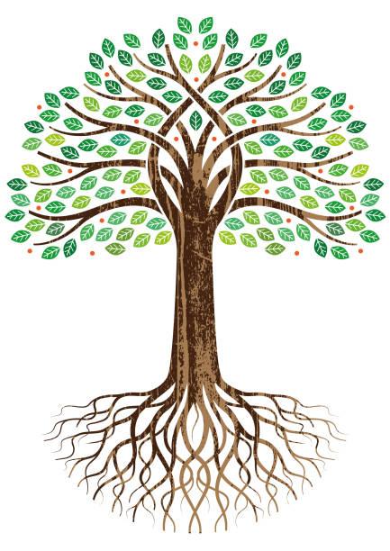 illustrazioni stock, clip art, cartoni animati e icone di tendenza di open entwined tree illustration - radice