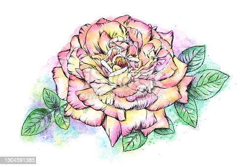 istock Open Rose Pen and Watercolor and Ink Floral Drawing. Vector EPS10 Illustration 1304591383