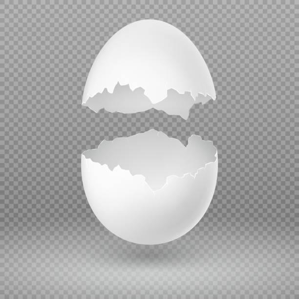 opened white egg with broken shell isolated vector illustration - egg stock illustrations, clip art, cartoons, & icons