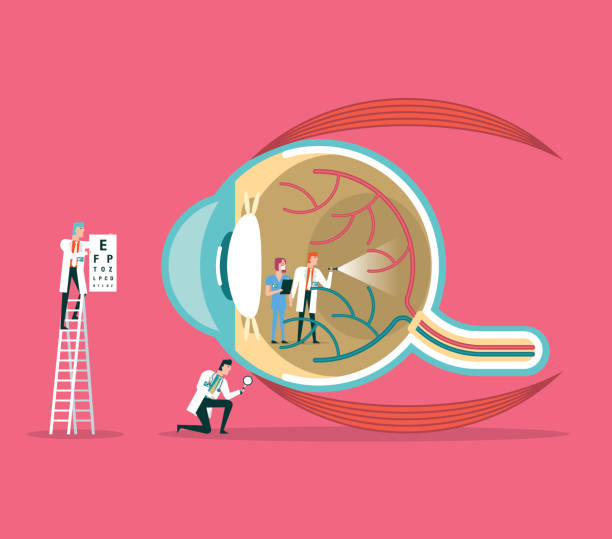 ophthalmologist - сетчатка stock illustrations