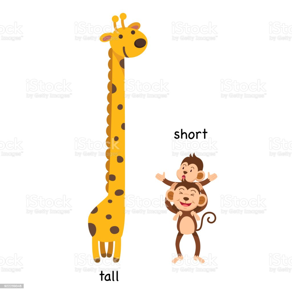 Download Shorter: Opposite Tall And Short Illustration Stock Illustration