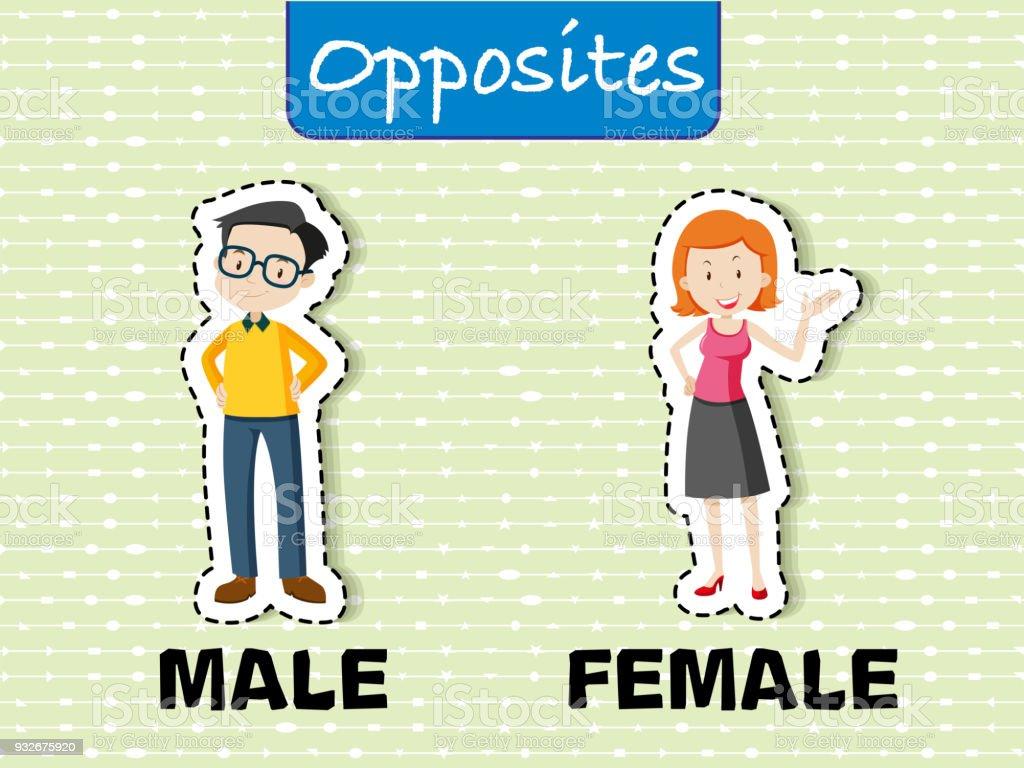 Opposite words for male and female vector art illustration