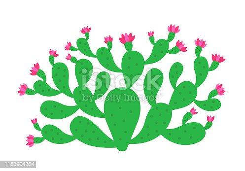 Opuntia cactus plant. Prickly pear blossom. Nopal. Indian fig opuntia shrub. Vector flat illustration.