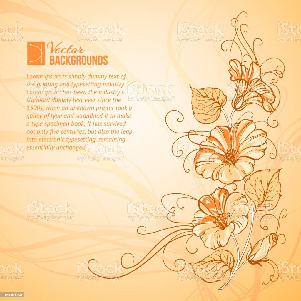 Orange Bindweed royalty-free stock vector art