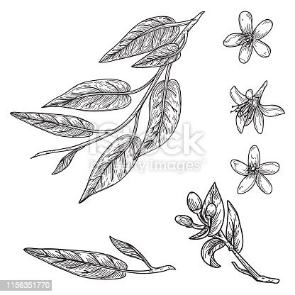 istock Orange Blossom and Leaves in Vintage Retro Style 1156351770