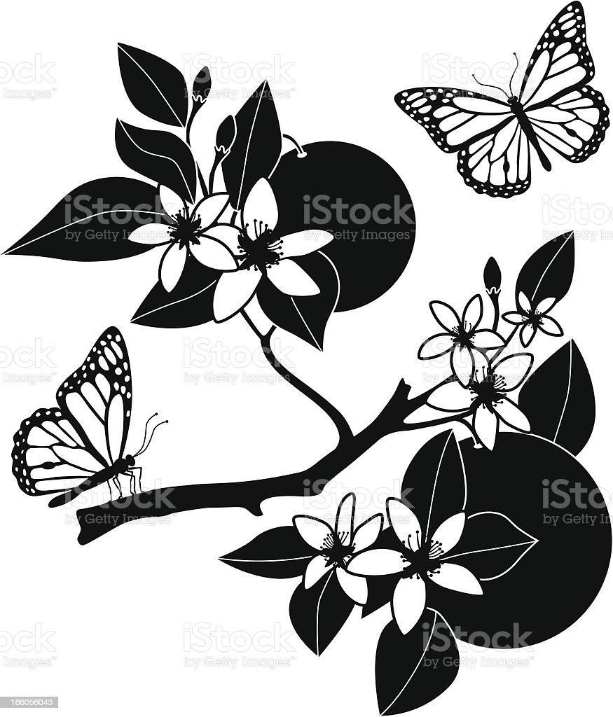orange blossoms and monarch butterflies stock vector art 166056043