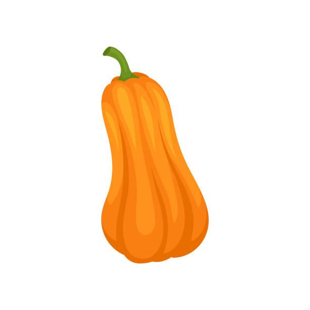 orange kürbis vektor-illustration auf weißem hintergrund - flaschenkürbis stock-grafiken, -clipart, -cartoons und -symbole