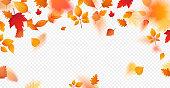 Autumn leaves background. Vector template for seasonal design.