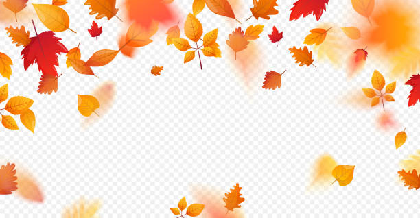 Orange fall colorful leaves flying falling effect. Autumn leaves background. Vector template for seasonal design. fall leaves stock illustrations