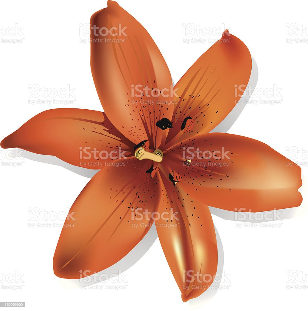 Orange flower royalty-free orange flower stock vector art & more images of abstract