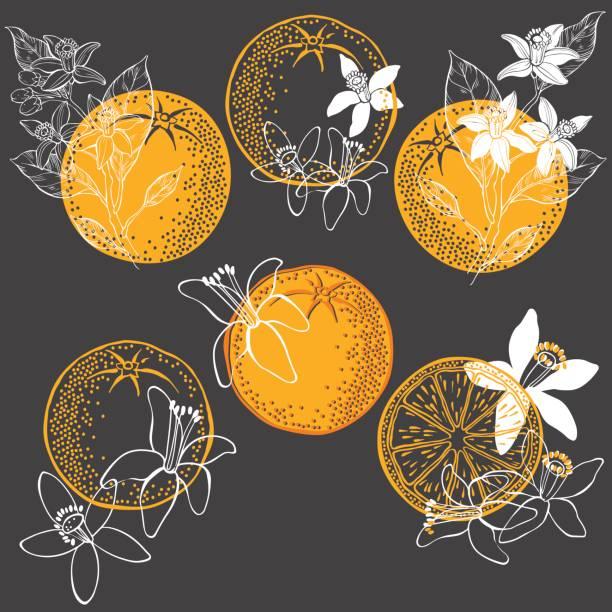 bildbanksillustrationer, clip art samt tecknat material och ikoner med orange frukt och blomma. vektorillustration av sex olika isolerade element för design. handritade blommiga inslag på en mörk bakgrund. - apelsin