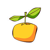 Vector illustration of a cute orange fruit. Cut out design element for ideas and concepts about healthy eating and lifestyles, ketogenic, paleo and low-carb diets, weight loss, restaurants and coffee shops, social media platforms and online messaging, vegetarian and vegan diets, sweet foods and desserts, food recipes and design projects in general.