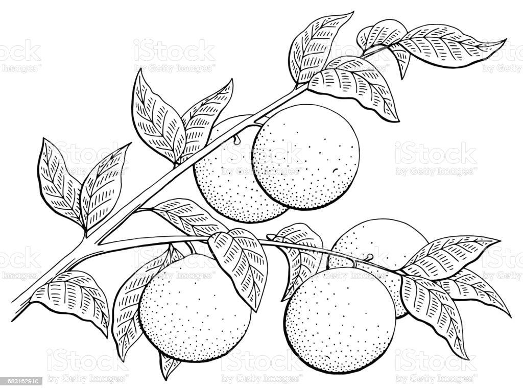 Orange fruit graphic branch black white isolated sketch illustration vector 免版稅 orange fruit graphic branch black white isolated sketch illustration vector 向量插圖及更多 一個物體 圖片