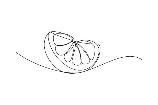 Orange fruit slice Orange fruit slice in continuous line art drawing style. Black line sketch on white background. Vector illustration fruit drawings stock illustrations