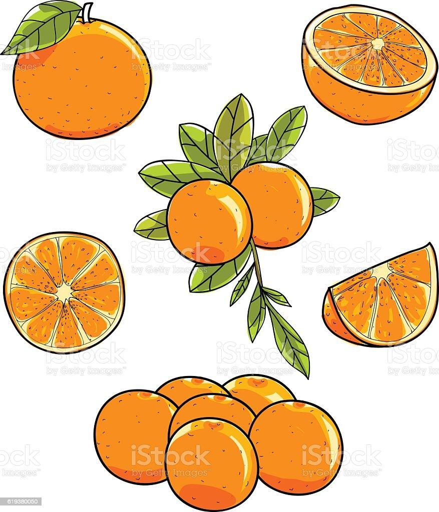 Orange fruit vector hand drawn on white background illustration vector art illustration