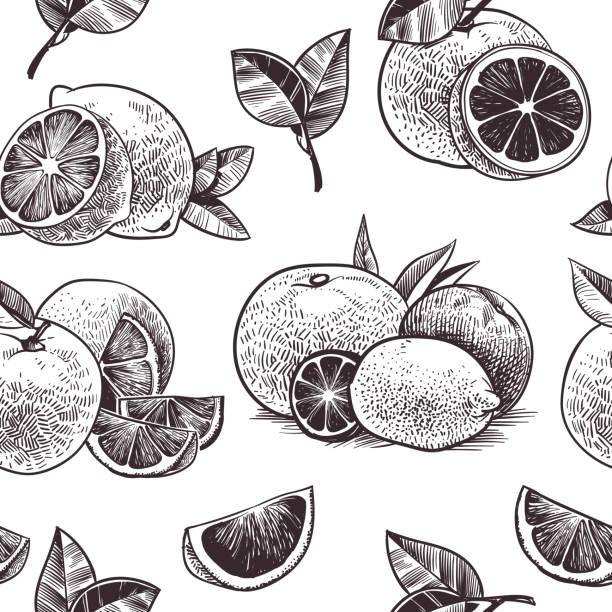 illustrations, cliparts, dessins animés et icônes de motif sans couture de fruits oranges. agrumes de cru, oranges dessinées à la main avec des fleurs et des feuilles esquissent le papier peint tropical de vecteur - infusion pamplemousse