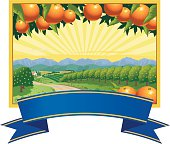 View of orange orchards and farmhouse with mountains and sunrise in the background. Type banner with copy space can be removed. Ideal for label or retail use. Art on easily edited layers.