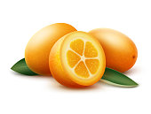 Vector orange kumquat fruits and green leaves isolated on white background