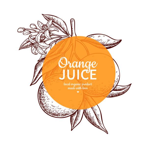 Orange label vector drawing. Citrus fruit engraved frame template. Hand drawn summer vector art illustration