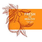 Orange label vector drawing. Citrus fruit engraved template. Hand drawn summer illustration. Vintage banner, product packaging, design concept. Tropical juice poster, grapefruit sign