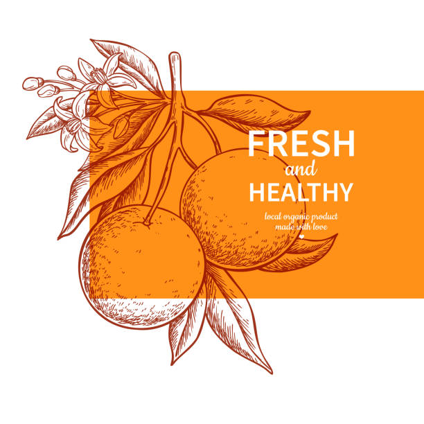ilustrações de stock, clip art, desenhos animados e ícones de orange label vector drawing. citrus fruit engraved template. - orange