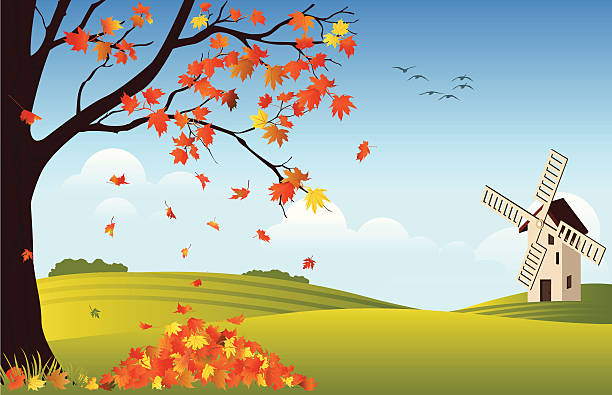 Orange leaves falling off tree in fall with windmill in rear Field with a windmill and single tree. maple leaf illustrations stock illustrations