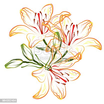 Orange lily (Hemerocallis). Hand drawn stylized vector brush sketch of lily flowers for greeting cards.