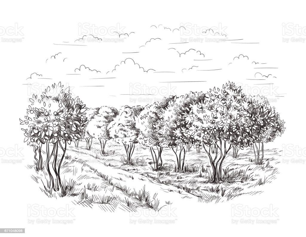 Orange Orange Tree Orange Park Stock Illustration ...