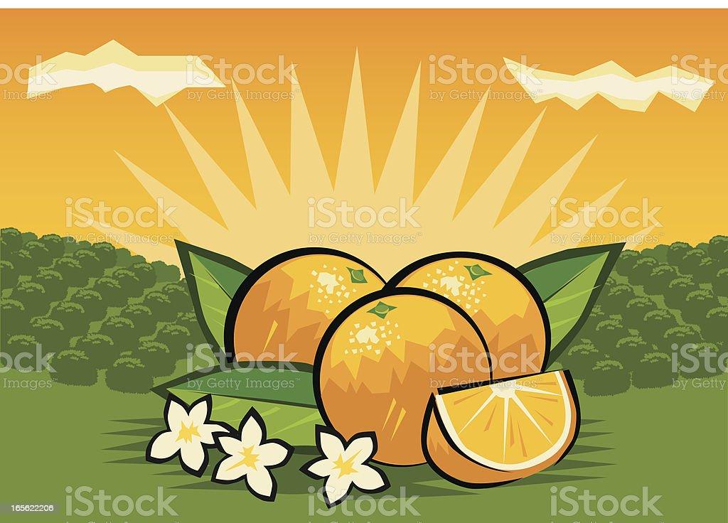 Orange Orchard royalty-free stock vector art