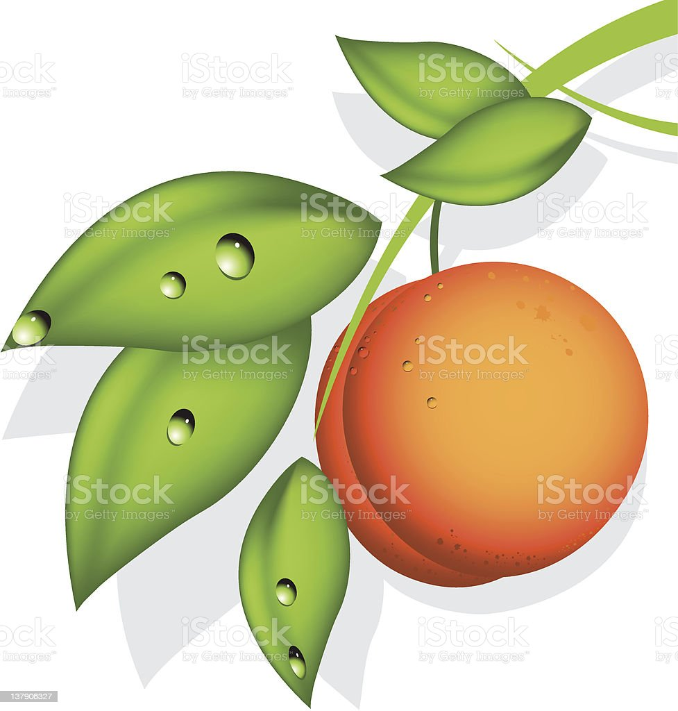 orange peach vector art illustration