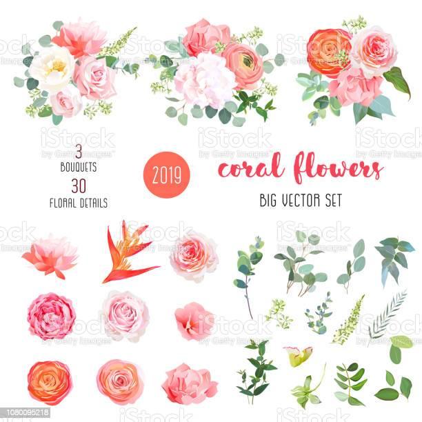 Orange ranunculus pink rose hydrangea coral carnation garden flowers vector id1080095218?b=1&k=6&m=1080095218&s=612x612&h=jpg7evs9m1yfkuwy1apmbnq3mdyq30vlogrj5vrgaue=