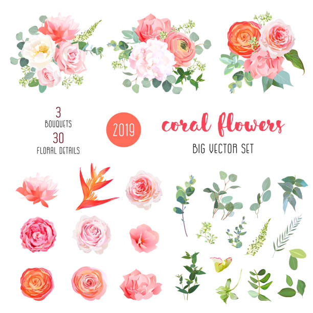 Orange ranunculus, pink rose, hydrangea, coral carnation, garden flowers Orange ranunculus, pink rose, hydrangea, coral carnation, garden flowers, greenery and decorative plants big vector set. Living coral 2019 trendy color collection. Elements are isolated and editable flowers stock illustrations