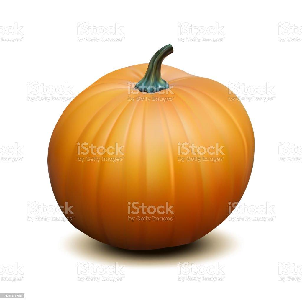 Orange realistic pumpkin vector art illustration