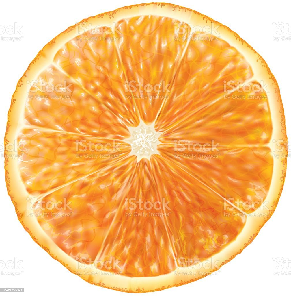 Orange slice vector art illustration