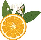 Orange slice with flowers and green leaves on white background. Flowers of an orange