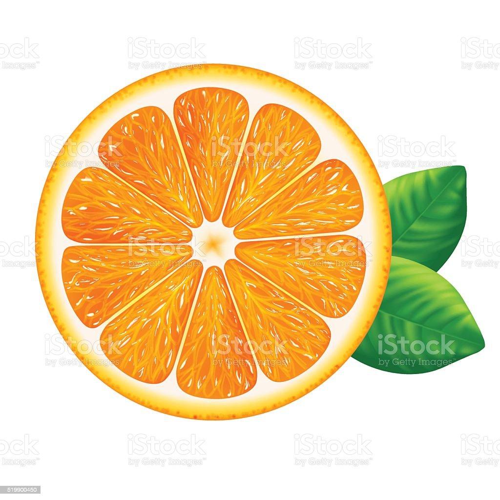 Orange slice with leaves isolated on white background. vector art illustration