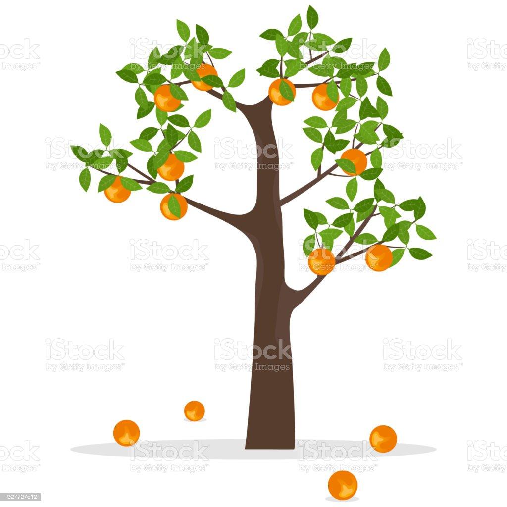 ilustración de naranjo un árbol con naranjas naranjas maduras colgar
