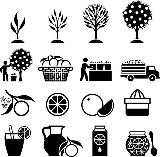 Orange Tree Growing and organic farming black & white icons vector art illustration