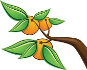 A branch with oranges. AI file included.