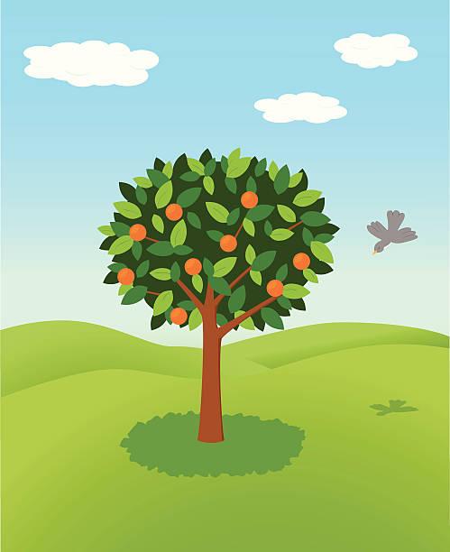 Orange Tree Illustrations, Royalty-Free Vector Graphics ...