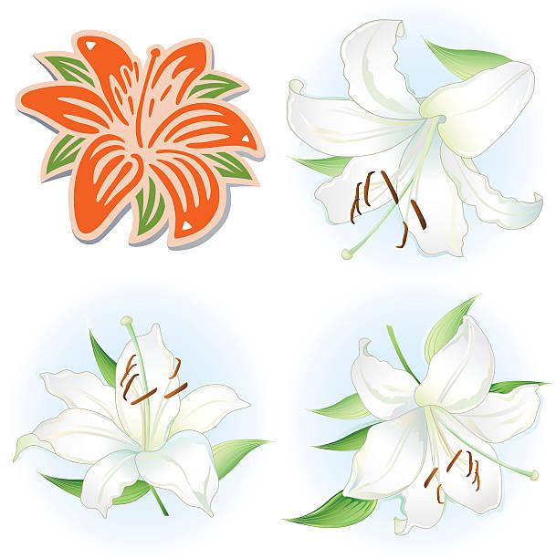 orange & weiße lilien satz - inkalilie stock-grafiken, -clipart, -cartoons und -symbole