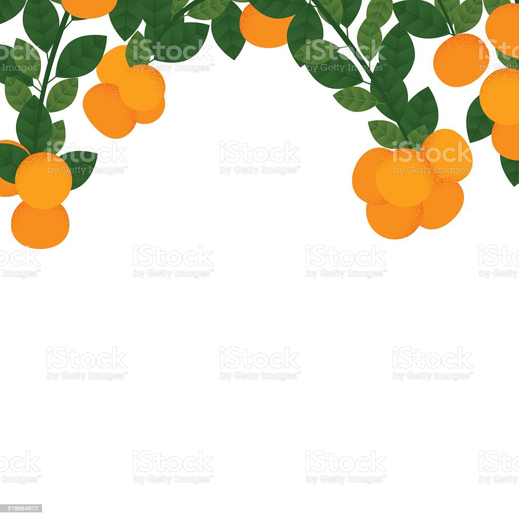 Orange with leaves and branches vector art illustration