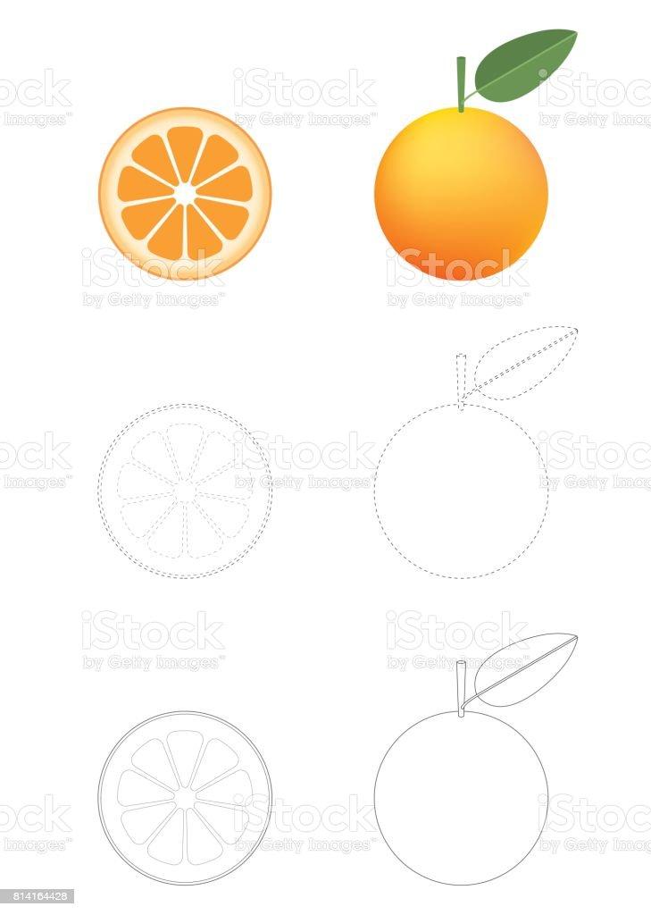 Orangen Malvorlagen Vektor Illustration 814164428 | iStock